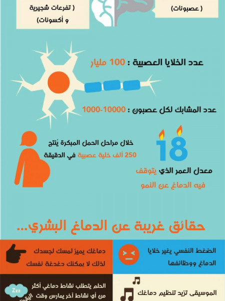 Brain facts Infographic