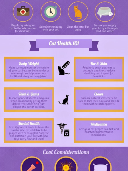 Keeping Your Cat Happy & Healthy  Infographic