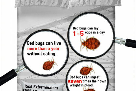 A bed bug time story Infographic