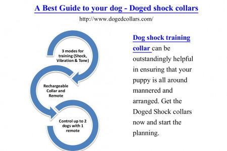 A best guide to your dog - doged shock collars Infographic