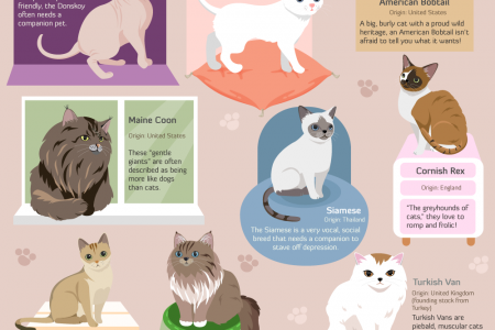 A Cavalcade of Cats Infographic