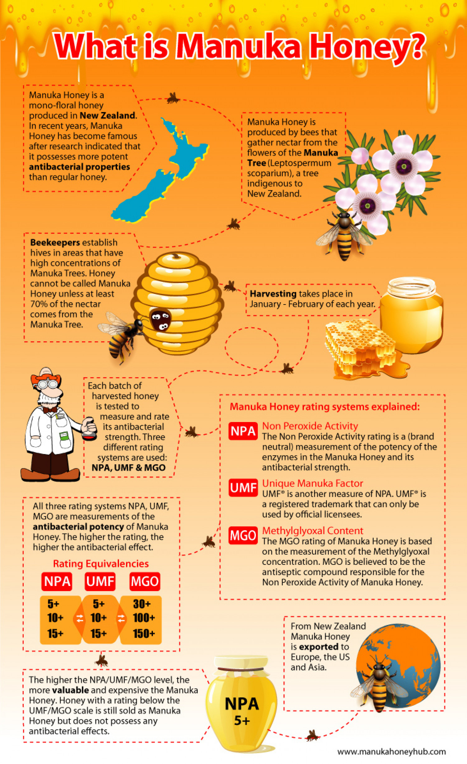 "A concise infographic summarizing the key answers to the question ""What is Manuka Honey? Infographic"