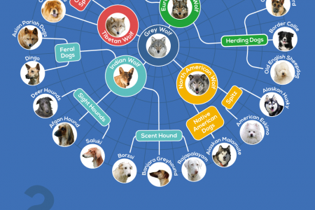 A History of Selective Breeding in Dogs Infographic