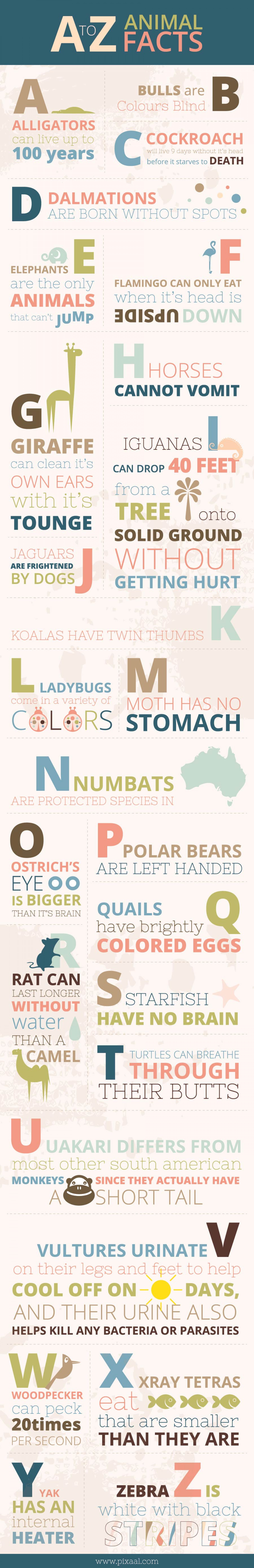 A to Z Animal Facts Infographic