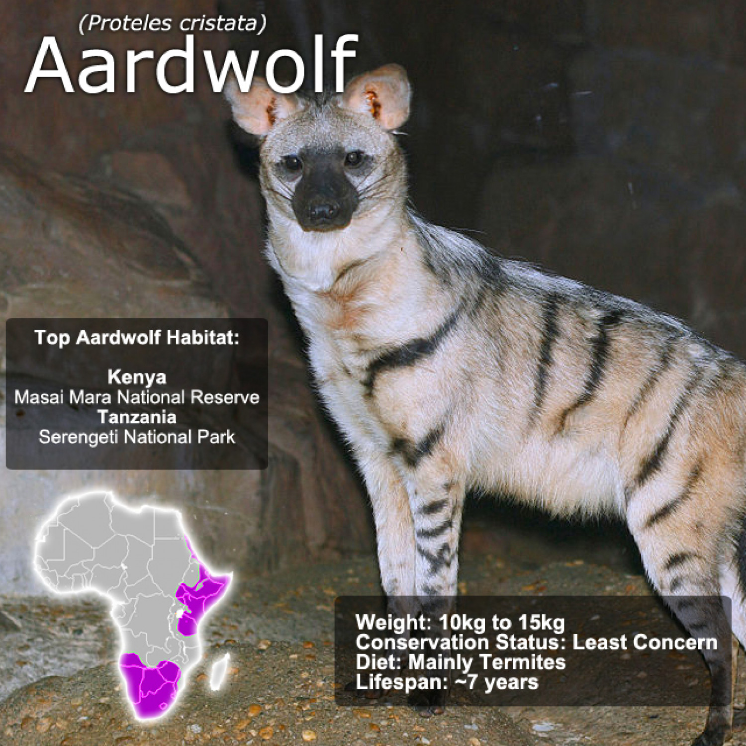 Aardwolf SnapFacts Infographic