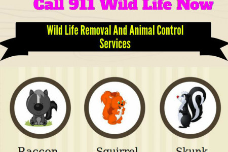 Affordable Wildlife Removal & Animal Control Services-Kitchener,Ontario Infographic