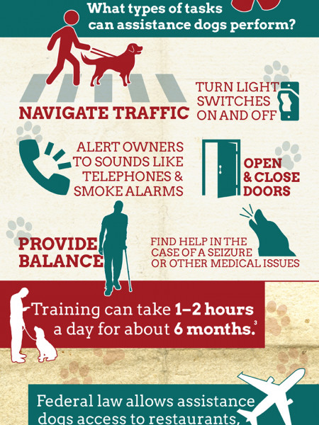 All About Assistance Dogs Infographic