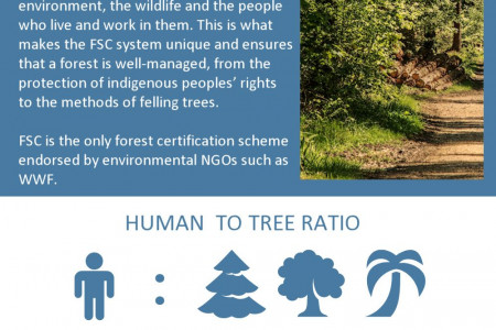 Always Use FSC certified Timber for Your Projects Infographic