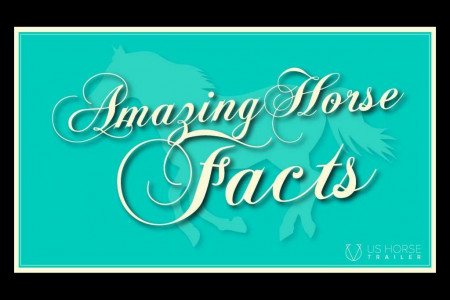 Amazing Horse Facts Infographic