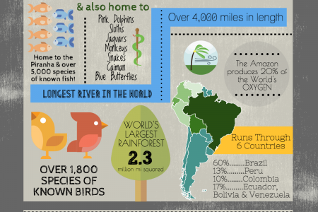 Amazon Jungle Facts Infographic