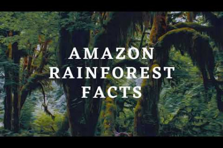 Amazon Rainforest Facts For Kids Infographic