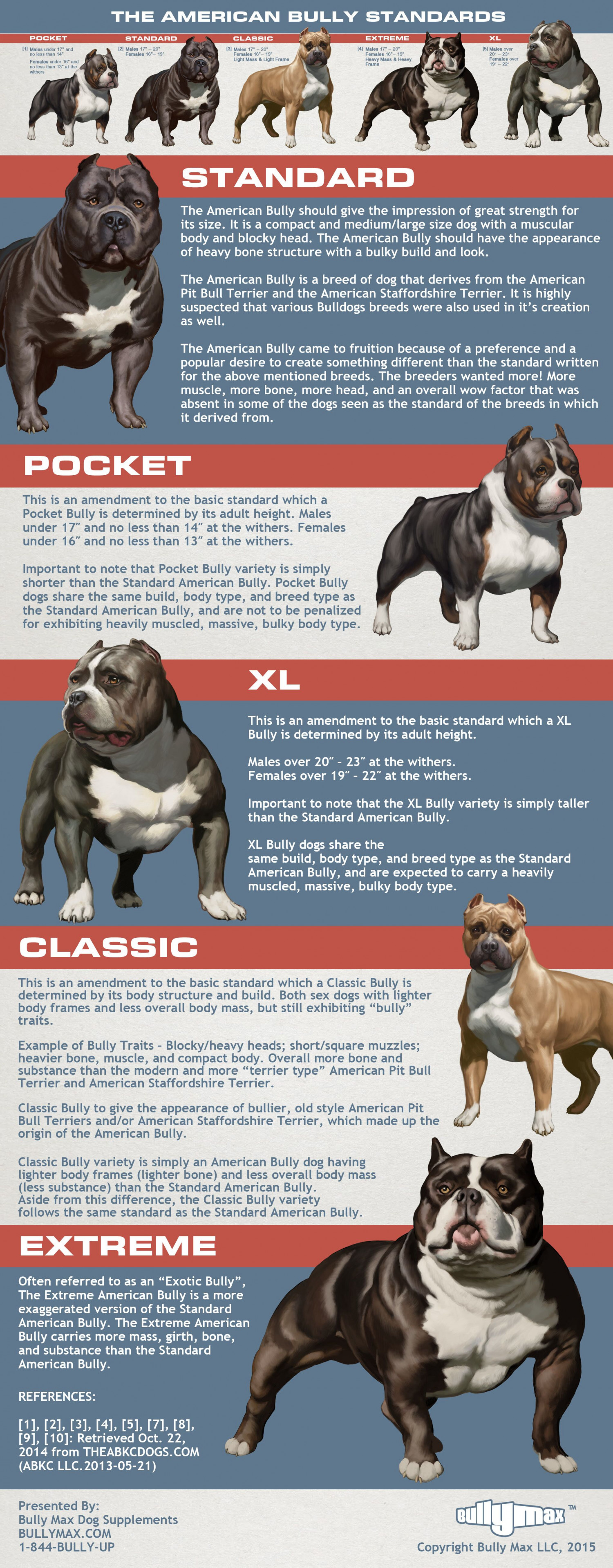 American Bully Standards Infographic
