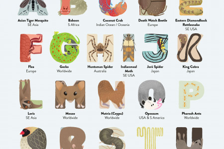 An A to Z of Extreme House Pests Infographic