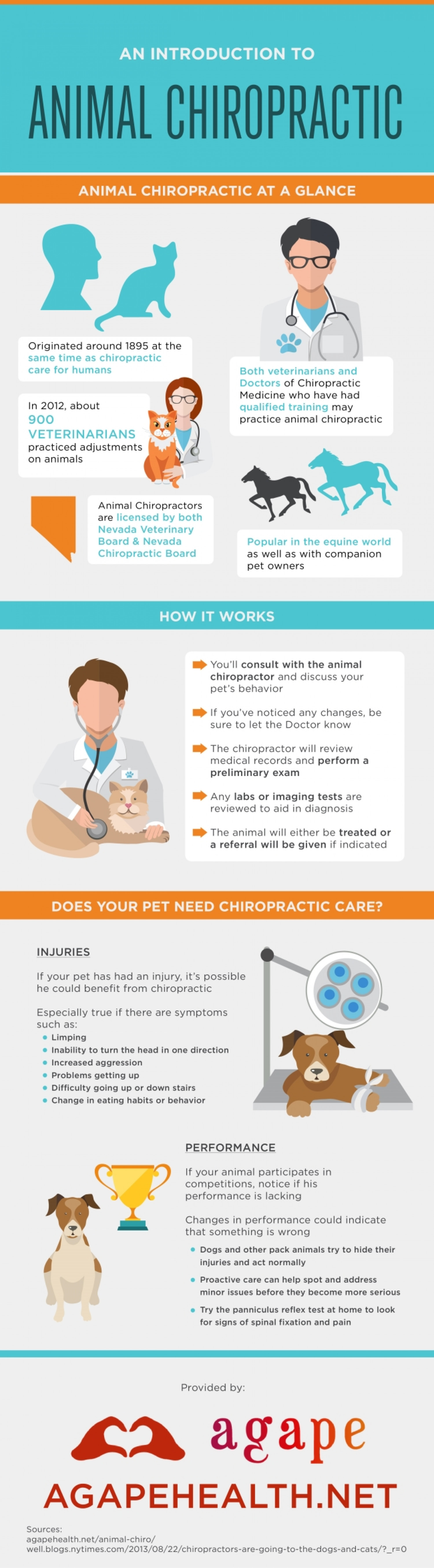 An Introduction to Animal Chiropractic Infographic