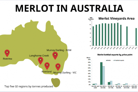An Introduction to Merlot Grape and Merlot Wines Infographic