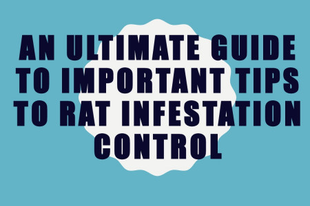 An ultimate guide to important tips to rat infestation control Infographic