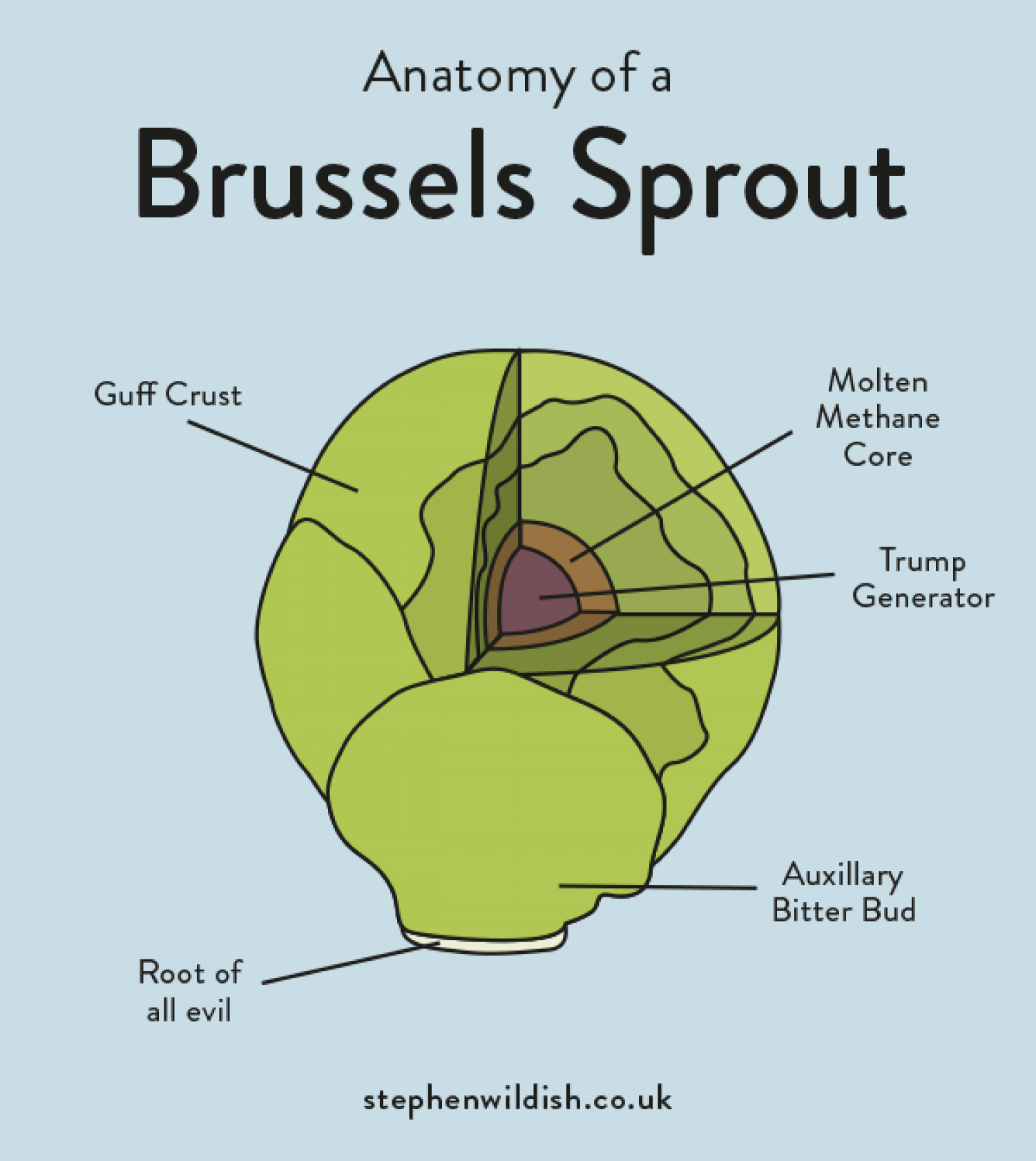 Anatomy of a Brussels Sprout | Visual.ly