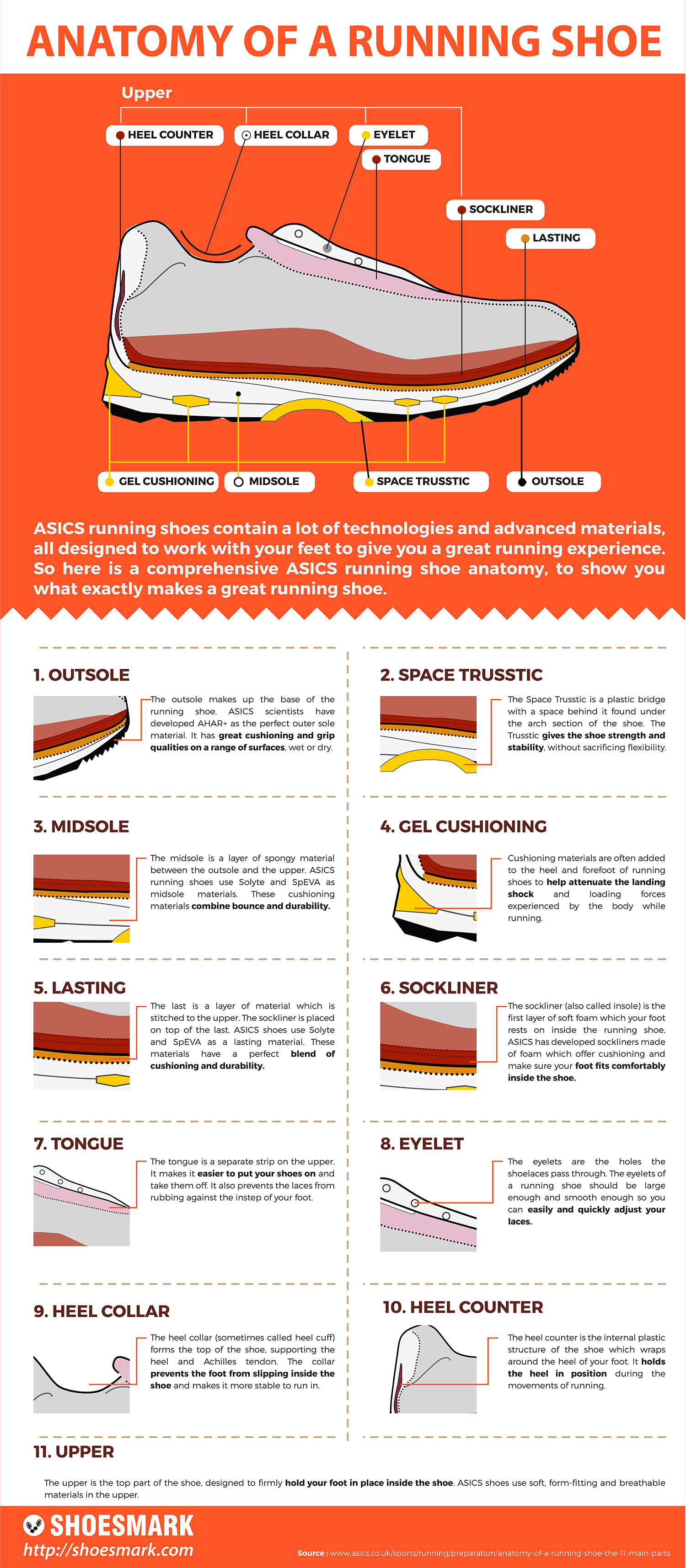 Anatomy of a Running Shoes Infographic