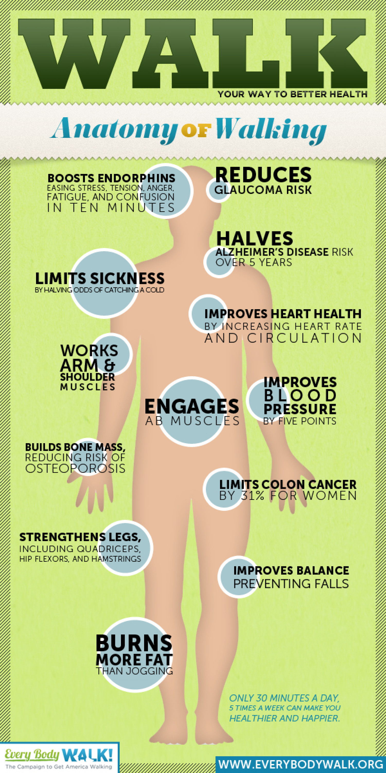 Anatomy Of Walking Visual