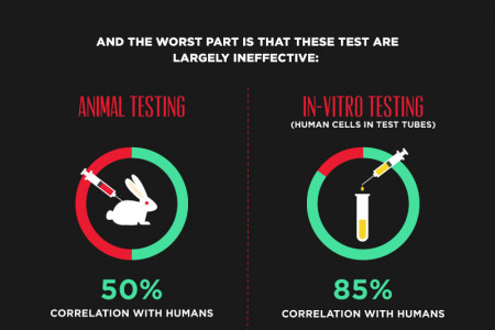 Animal Cruelty for Cosmetics   Infographic