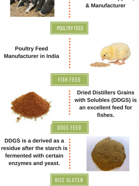 Animal Feed Suppliers, DDGS Feed Infographic