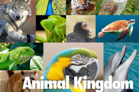 Animal kingdom Infographic