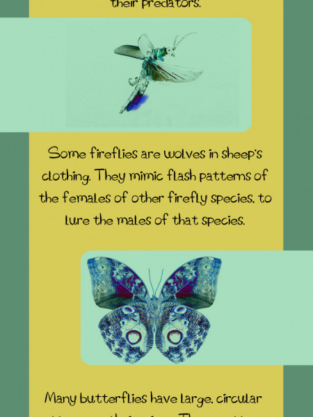 Animal Mimicry Infographic