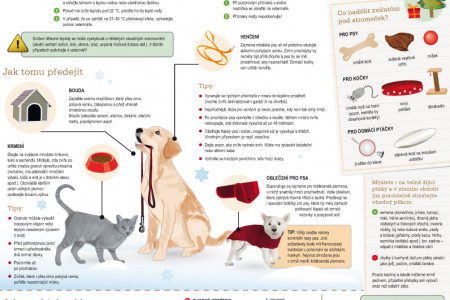 Animals in winter Infographic