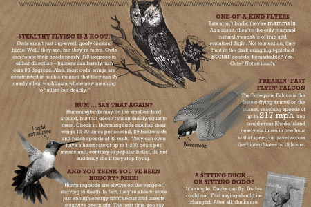 Animals of Flight Infographic
