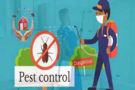 Ant Pest Control in Local City Ghaziabad Infographic