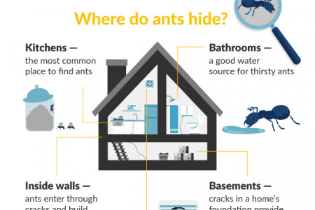 Ants in the House & Warning Signs Infographic