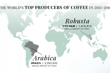 Arabica Vs Robusta: What's the Difference? Infographic