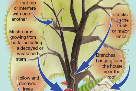 Are Your Trees in Trouble? Infographic