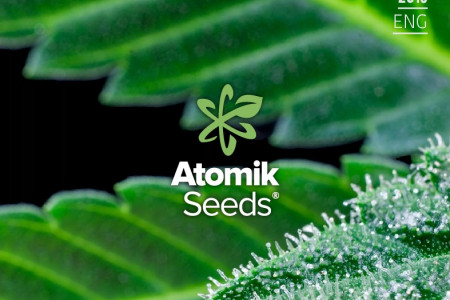 Atomik Seeds Catalog autoflowering and feminised cannabis seedbank Infographic