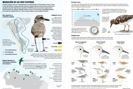 Aves playeras Infographic