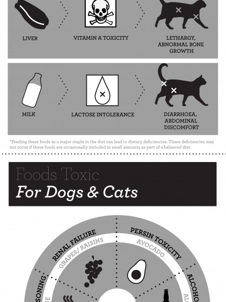 Avoid a Pet Emergency Infographic
