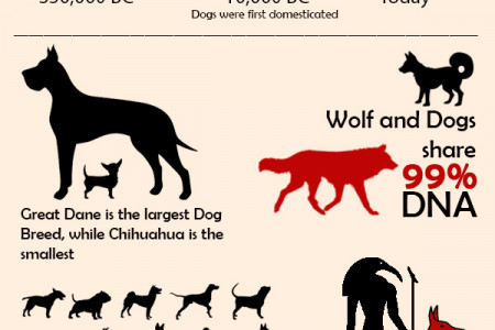 Awesome Dog (Canine) Facts Infographic