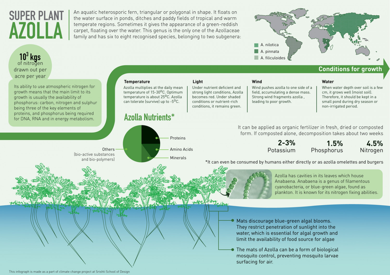 Azolla SuperPlant Infographic