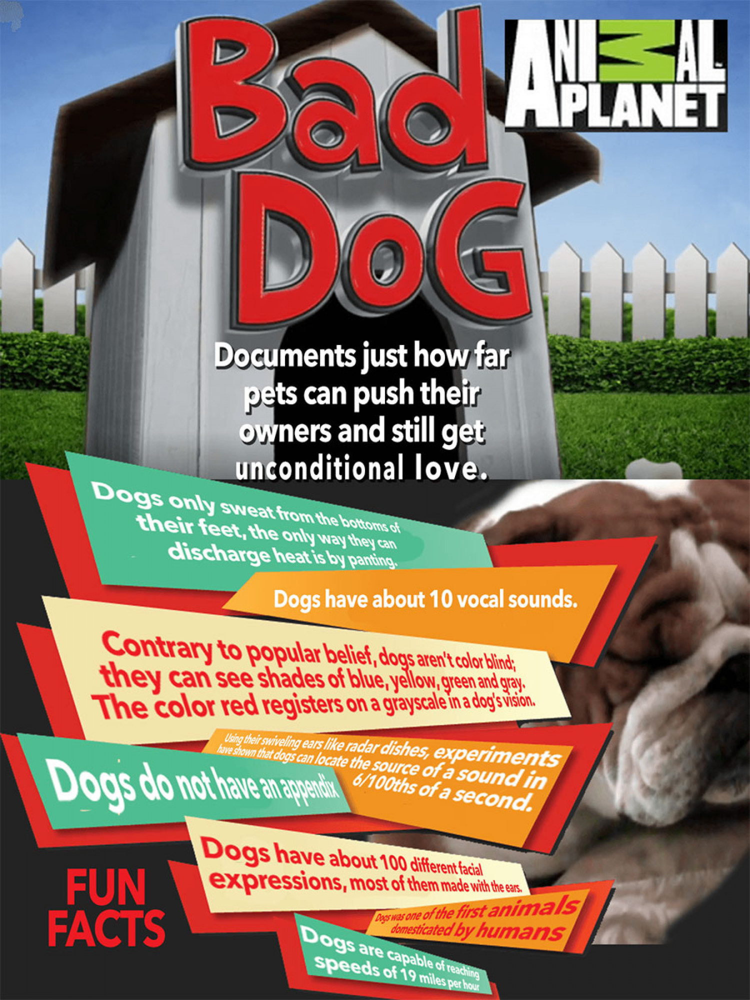 Bad Dogs: So bad and yet the pet owners are still gaga over him Infographic