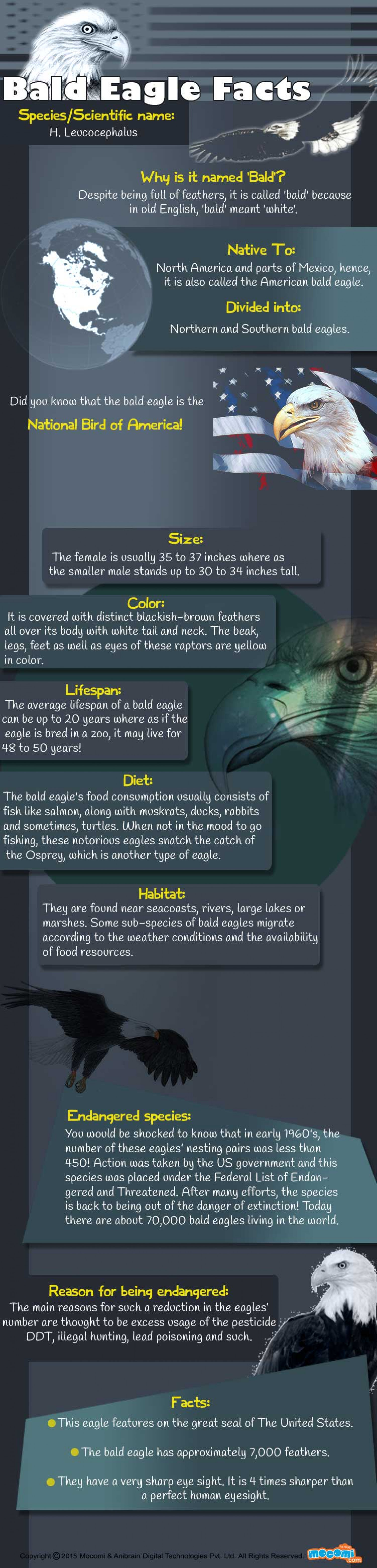 Bald Eagle Fact Sheet Infographic