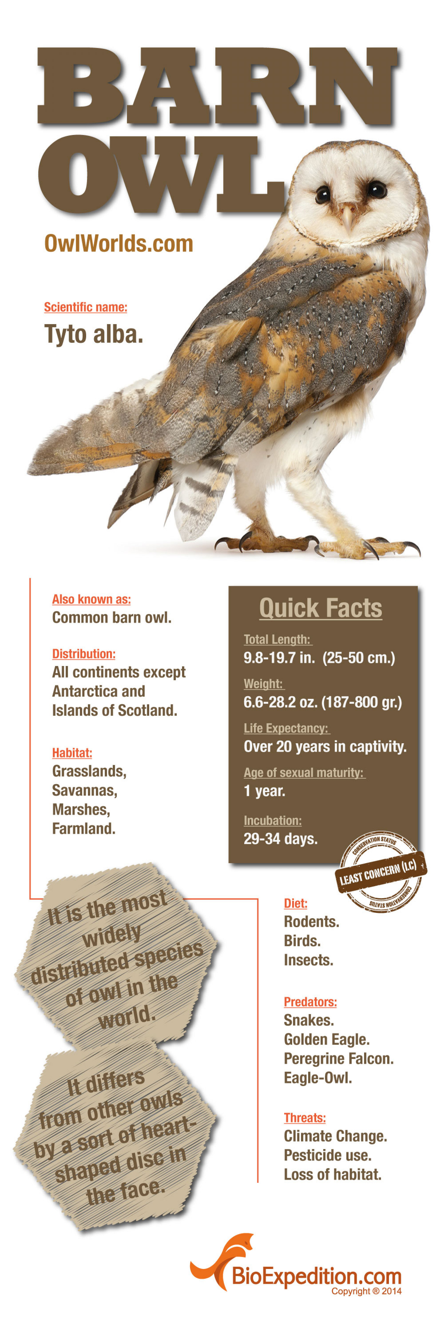 Barn Owl Infographic