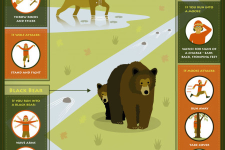 Be Ready For Your Next Wildlife Encounter Infographic