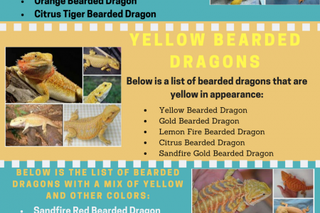 Bearded Dragon Colors Infographic