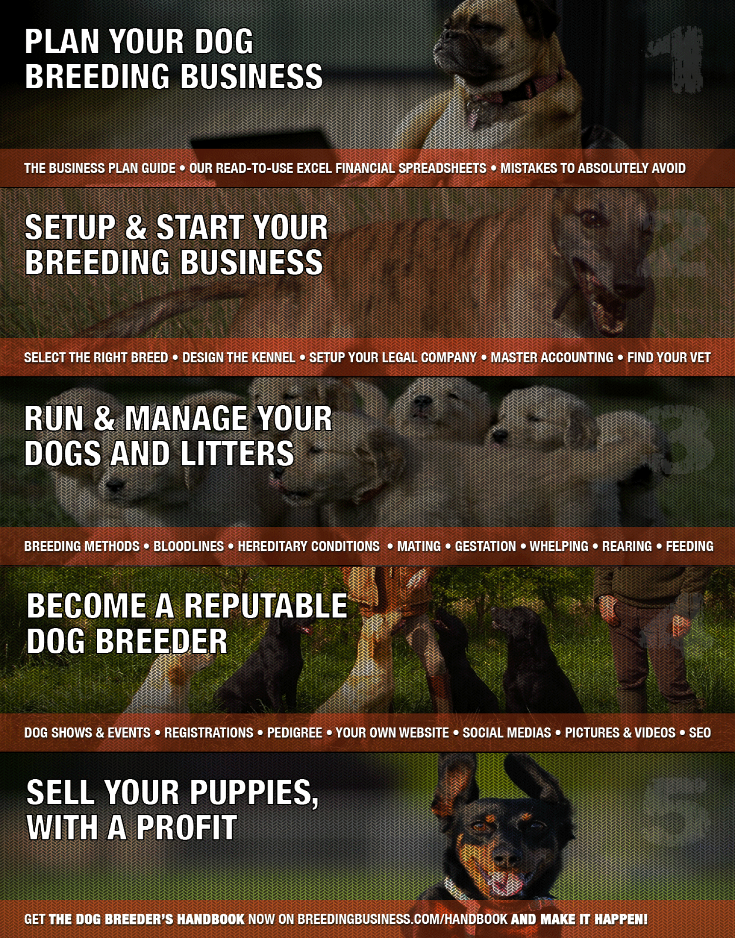 Become The Best At Dog Breeding in Five Simple Steps! Infographic