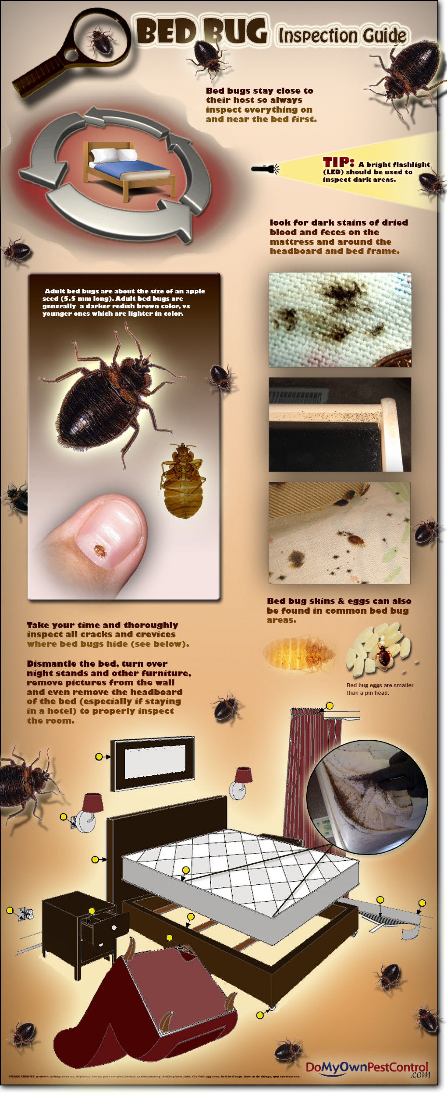 Bed Bug Inspection Guide Infographic