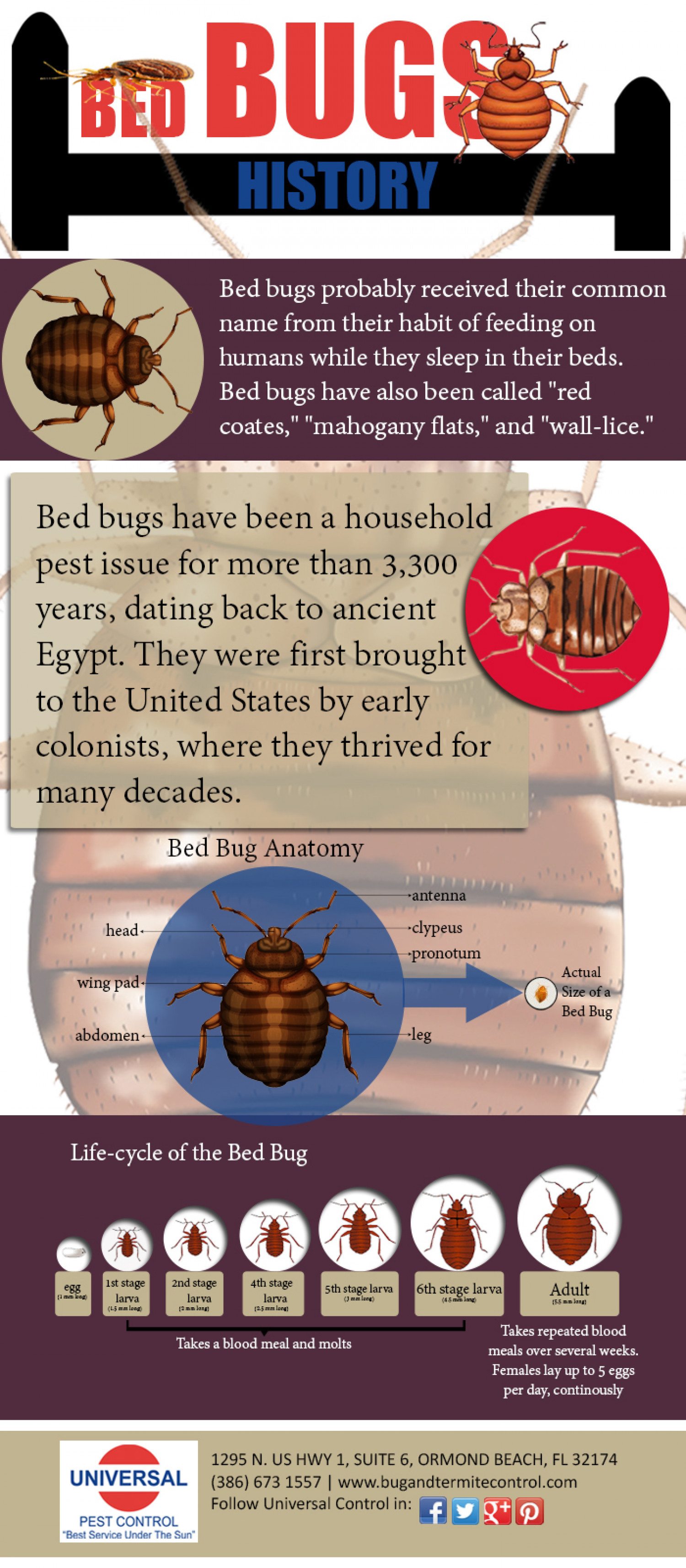 Bed Bugs History Infographic