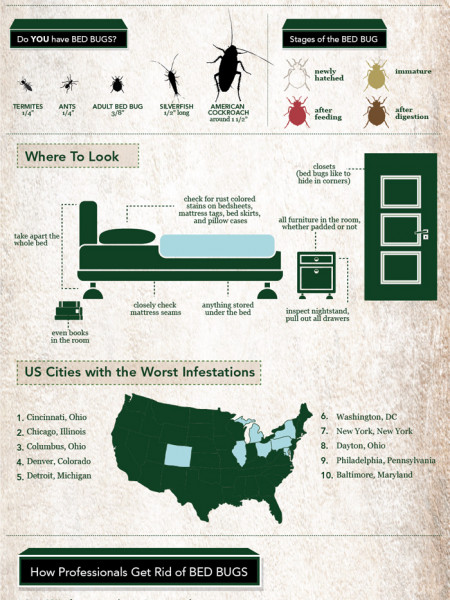 Bed Bugs Rise Again Infographic