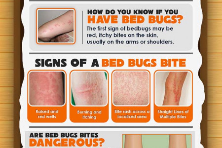 Bed Bugs- Understanding Your Unwanted Guests Infographic