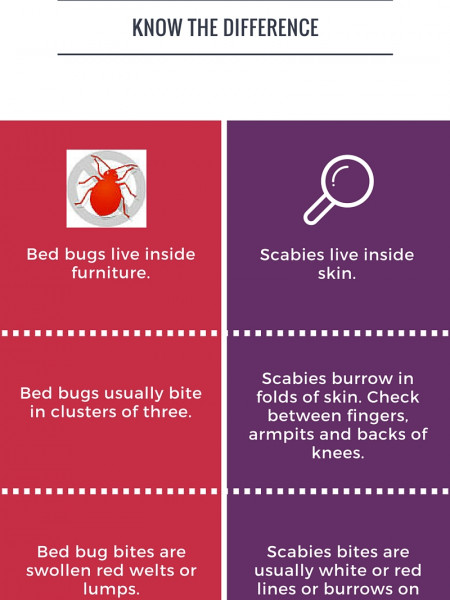 Bed Bugs Vs. Scabies Infographic