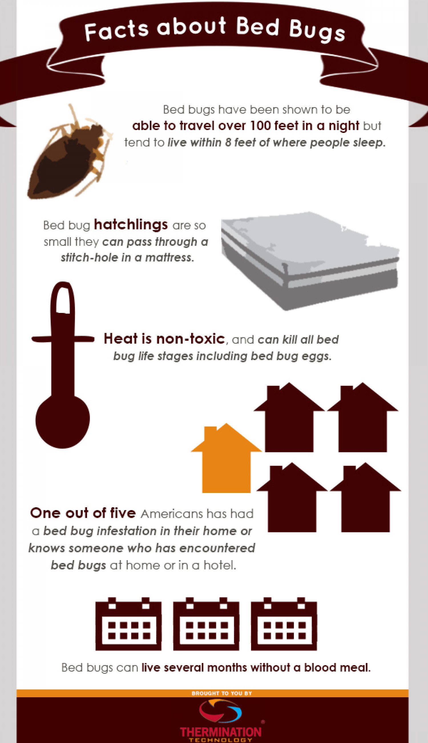 Facts About Bed Bugs Infographic